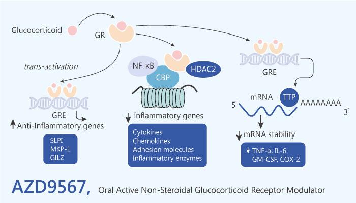AZD9567 Non Steroidal Glucocorticoid Receptor Modulator Inflammation 2019 04 18 - An Oral Active Non-Steroidal Glucocorticoid Receptor Modulator AZD9567