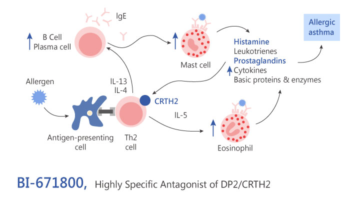 BI 671800 DP2 CRTH2 Antagonist atopic disease Inflammation ashtma 2019 04 15 - BI-671800 as a DP2/CRTH2 Antagonist