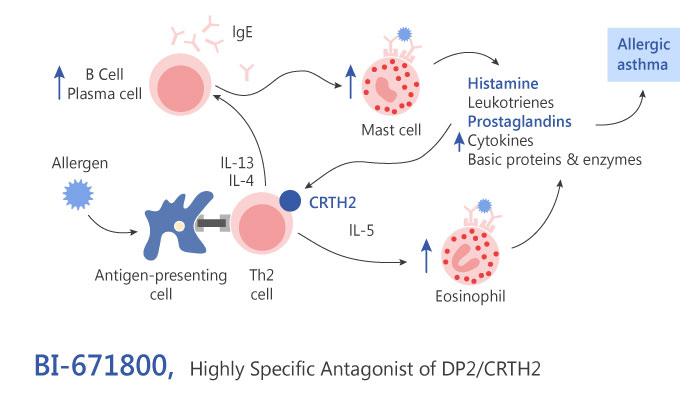 BI 671800 DP2 CRTH2 Antagonist atopic disease Inflammation ashtma 2019 04 15 - BI-671800 as a DP2/CRTH2 Antagonist