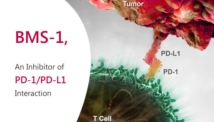 BMS 1 PD 1 PD L1 Interaction inhibitor liver cancer homeostasis 2019 04 06 - BMS-1, a Novel Inhibitor of PD-1/PD-L1 Interaction