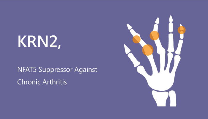 KRN2 NFAT5 Suppressor Chronic Arthritis 2019 05 04 - KRN2 is a NFAT5 Suppressor against Chronic Arthritis