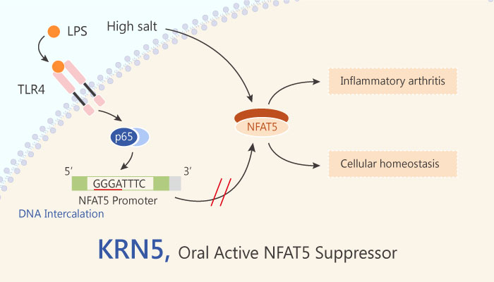 KRN5 Nuclear Factor of Activated T Cells 5 NFAT5 Suppressor 2019 04 29 - KRN5 is a Nuclear Factor of Activated T Cells 5 (NFAT5) Suppressor