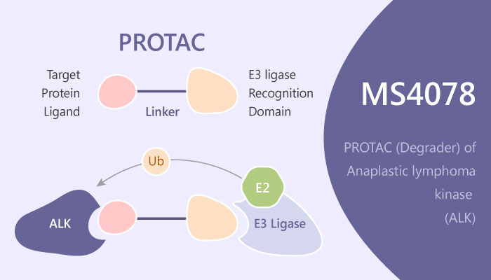 MS4078 Immune Response NPM ALK PROTAC Cancer Immunotherapy 2019 04 14 - MS4078 Inhibits an Immune Response Target NPM-ALK Protein