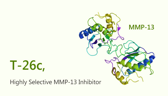 T 26c MMP 13 Inhibitor Inflammation 2019 04 17 - T-26c, A Highly Selective MMP-13 Inhibitor