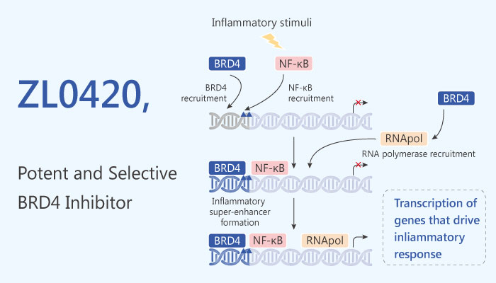 ZL0420 BRD4 inhibitor viral infection airway inflammation 2019 04 20 - ZL0420 is A High Potent BRD4 Inhbitor