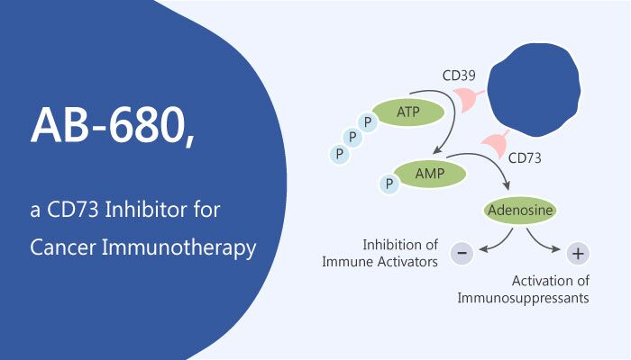 AB 680 a CD73 Inhibitor for Cancer Immunotherapy 2019 05 24 - AB-680 is a CD73 Inhibitor for Cancer Immunotherapy