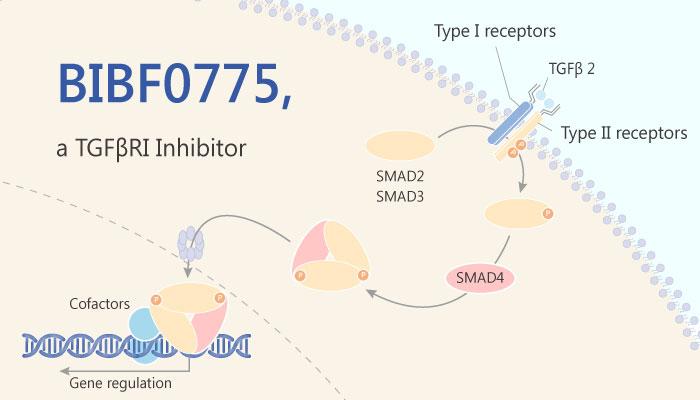 BIBF0775 transforming growth factorβ TGFβ typeI receptor Alk5 inhibitor 2019 05 10 - BIBF0775 is a TGFβRI Inhibitor