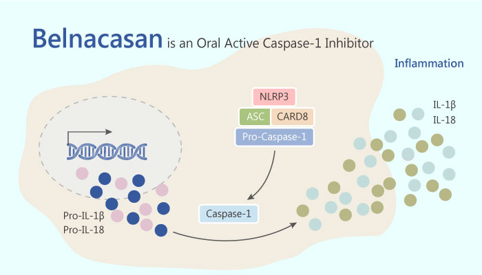 Belnacasan is an Orally Active ICEcaspase 1 Inhibitor for Treatment of Inflammatory and Autoimmune 2019 05 31 - Belnacasan is an Orally Active ICE/caspase-1 Inhibitor for Treatment of Inflammatory and Autoimmune