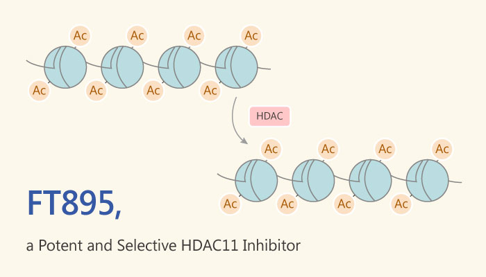 FT895 HDAC11 Inhibitor Cancer Immunology 2019 05 09 - FT895 is a Potent and Selective HDAC11 Inhibitor