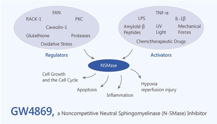 GW4869 Noncompetitive Neutral Sphingomyelinase Inhibitor 2019 05 18 - GW4869, a Noncompetitive Neutral Sphingomyelinase (N-SMase) Inhibitor