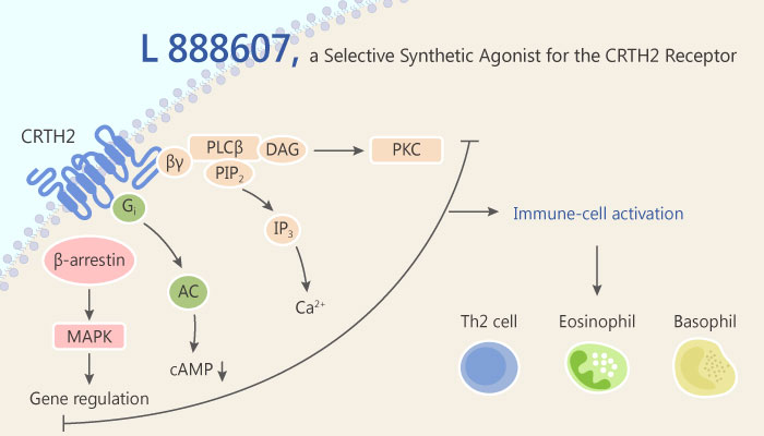L 888607 is a Selective CRTH2 Receptor Synthetic Agonist 219 05 27 - L 888607 is a Selective CRTH2 Receptor Synthetic Agonist
