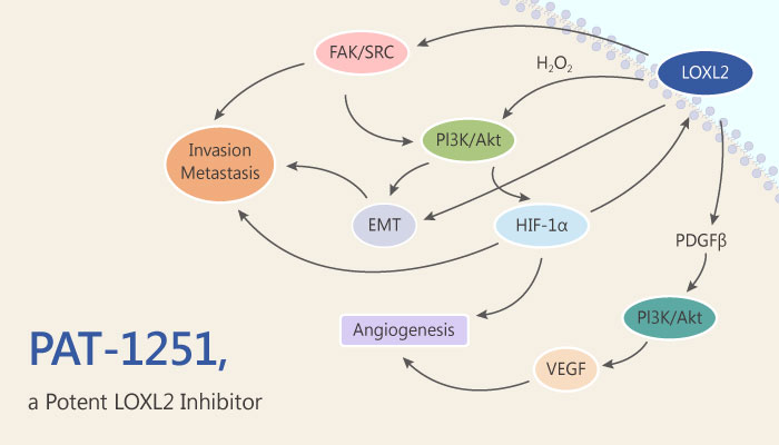 PAT 1251 a Potent LOXL2 Inhibitor for Treatment of Fibrotic 2019 05 25 Disease - PAT-1251, a Potent LOXL2 Inhibitor for Treatment of Fibrotic Disease