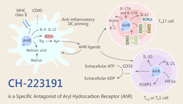 CH 223191 Inhibits Smoking Induced Aggravation of Experimental Arthritis via Aryl Hydrocarbon Receptor 2019 06 30 - CH-223191 Inhibits Smoking-Induced Aggravation of Experimental Arthritis via Aryl Hydrocarbon Receptor