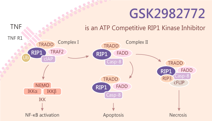 GSK2982772 is an ATP Competitive RIP1 Kinase Inhibitor 2019 06 28 - GSK2982772 is an ATP Competitive RIP1 Kinase Inhibitor