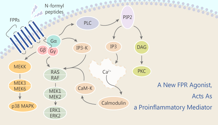 A Novel FPR Agonist Acts As a Proinflammatory Mediator 2019 07 12 - A Novel FPR Agonist, Acts As a Proinflammatory Mediator