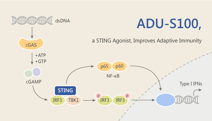 ADU S100 a STING Activator Improves CD8 T Cell Mediated Adaptive Immunity 2019 07 19 - ADU-S100, a STING Activator, Improves CD8+ T Cell-Mediated Adaptive Immunity