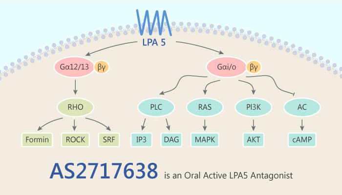 AS2717638 is an Oral Active LPA5 Antagonist