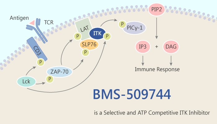 BMS 509744 is a Selective and ATP Competitive ITK Inhibitor 2019 07 09 - BMS-509744 is a Selective and ATP Competitive ITK Inhibitor