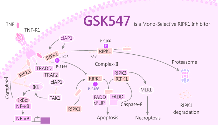 GSK547 a Mono Selective RIPK1 Inhibitor is Tumor Protective via Macrophage Mediated Th1 Th17 and CTL Activation 2019 07 26 - GSK547, a Mono-Selective RIPK1 Inhibitor, drives Macrophage-Mediated Th1/Th17 and CTL Activation
