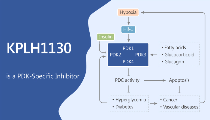 KPLH1130 is a Pyruvate Dehydrogenase Kinase Inhibitor Against Inflammatory Disease 2019 07 08 - KPLH1130 is a Pyruvate Dehydrogenase Kinase Inhibitor Against Inflammatory Disease