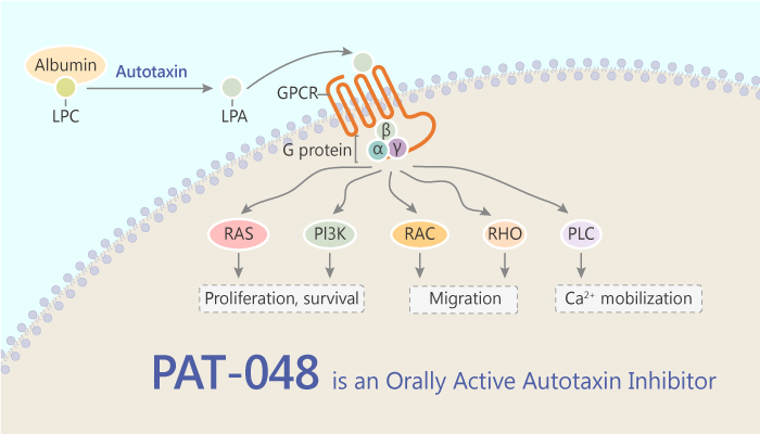 PAT 048 is a Selective and Orally Active Autotaxin Inhibitor 2019 07 29 - PAT-048 is a Selective and Orally Active Autotaxin Inhibitor
