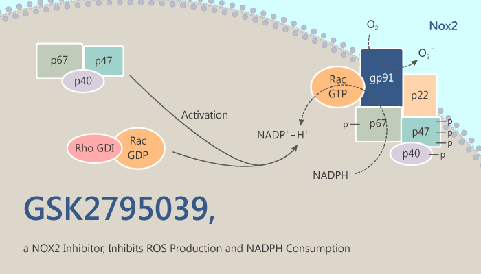 GSK2795039 a NOX2 Inhibitor Inhibits ROS Production and NADPH Consumption 2019 08 14 - GSK2795039, a NOX2 Inhibitor, Inhibits ROS Production and NADPH Consumption