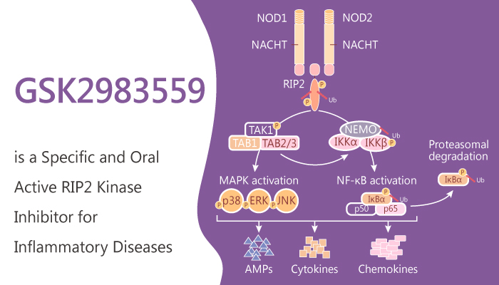 GSK2983559 is a Specific and Oral Active RIP2 Kinase inhibitor for Inflammatory Diseases 2019 09 01 - GSK2983559 is a Specific and Oral Active RIP2 Kinase Inhibitor for Inflammatory Diseases