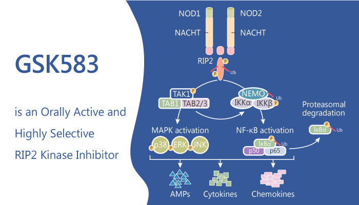 GSK583 is an Orally Active and Selective RIP2 Kinase Inhibitor 2019 09 03 - GSK583 is an Orally Active and Selective RIP2 Kinase Inhibitor