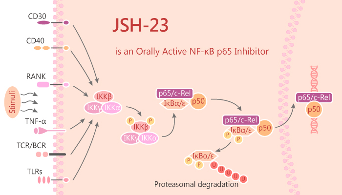 JSH 23 is an Orally Active NF κB p65 Inhibitor 2019 08 06 - JSH-23 is an Orally Active NF-κB p65 Inhibitor