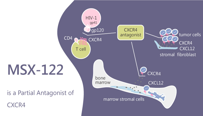 MSX 122 is a Partial Antagonist of CXCR4 2019 08 09 - MSX-122 is a Partial Antagonist ofCXCR4
