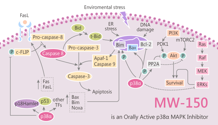 MW 150 an Orally Active p38α MAPK Inhibitor Modulates Cytokine Production and Cognitive Outcomes 2019 08 04 - MW-150, an Orally Active p38α MAPK Inhibitor, Modulates Cytokine Production and Cognitive Outcomes