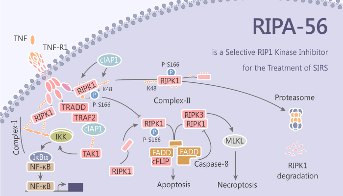 RIPA 56 is a Selective RIP1 Inhibitor for the Treatment of SIRS 2019 08 27 - RIPA-56 is a Selective RIP1 Inhibitor for the Treatment of SIRS