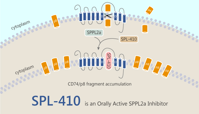 SPL 410 is an Orally Active SPPL2a Inhibitor 2019 08 1 - SPL-410 is an Orally Active SPPL2a Inhibitor