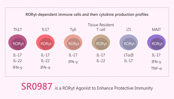 SR0987 is a RORγt Agonist to EnhanceP rotectiveI mmunity 2019 08 31 - SR0987 is a RORγt Agonist to Enhance Protective Immunity