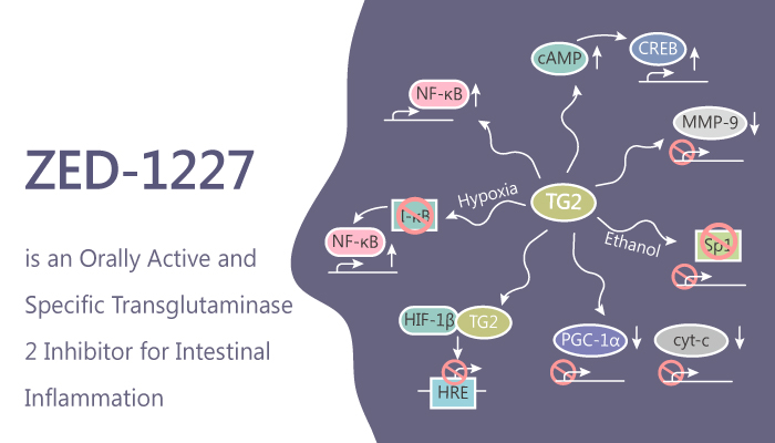 ZED 1227 is an Orally active and Specific Transglutaminase 2 Inhibitor for Intestinal Inflammation 2019 08 21 - ZED-1227 is an Orally Active and Specific Transglutaminase 2 Inhibitor for Intestinal Inflammation