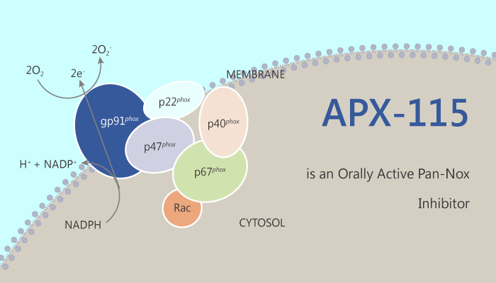 APX 115 is an Orally Active pan Nox Inhibitor 2019 09 13 - APX-115 is an Orally Active pan-Nox Inhibitor