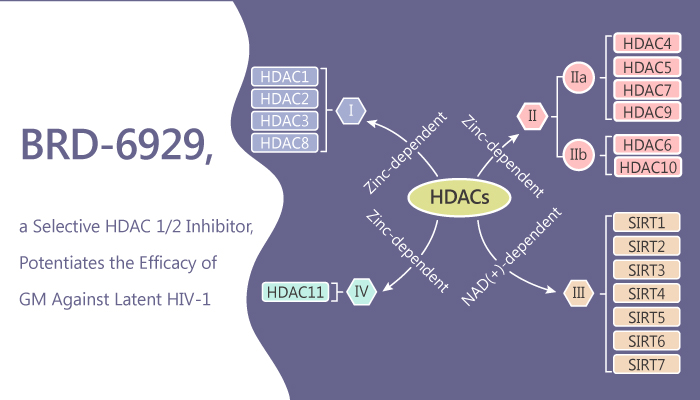 BRD 6929 a Selective HDAC12 Inhibitor Potentiates the Efficacy of GM Against Latent HIV 1 2019 09 10 - BRD-6929, a Selective HDAC 1/2 Inhibitor, Potentiates the Efficacy of GM Against Latent HIV-1