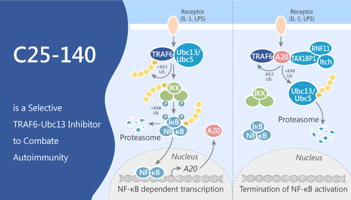 C25 140 is a Selective TRAF6 Ubc13 Inhibitor to Combate Autoimmunity 2019 09 27 - C25-140 is a Selective TRAF6-Ubc13 Inhibitor to Combate Autoimmunity