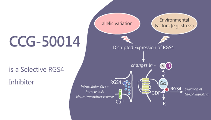 CCG 50014 is a Selective RGS4 Inhibitor 2019 09 28 - CCG-50014 is a Selective RGS4 Inhibitor