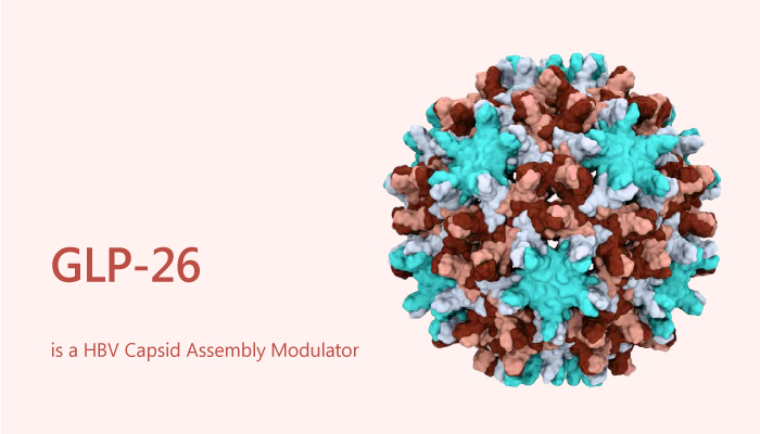 GLP 26 is a HBV Capsid Assembly Modulator 2019 09 11 - GLP-26 is a HBV Capsid Assembly Modulator