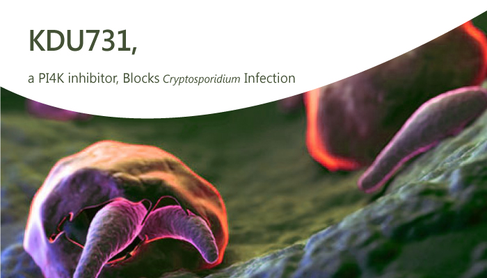 KDU731 a PI4K inhibitor Blocks Cryptosporidium Infection 2019 10 09 - KDU731, a PI4K inhibitor, Blocks <i>Cryptosporidium</i> Infection