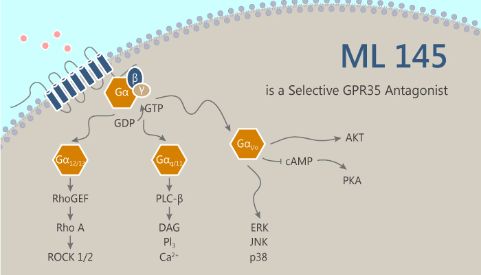 ML 145 is a Selective GPR35 Antagonist 2019 09 04 - ML 145 is a Selective GPR35 Antagonist