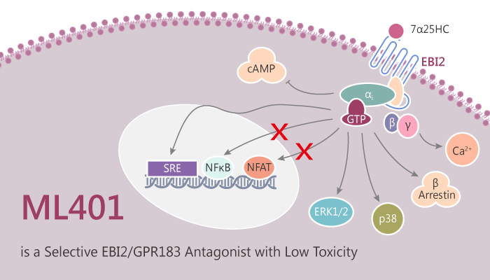 ML401 is a Selective EBI2 GPR183 Antagonist with Low Toxicity 2019 09 22 - ML401 is a Selective EBI2/GPR183 Antagonist with Low Toxicity