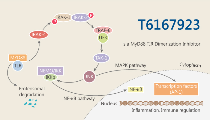 T6167923 is a MyD88 TIRD imerization Inhibitor 2019 09 24 - T6167923 is a MyD88 TIR Dimerization Inhibitor