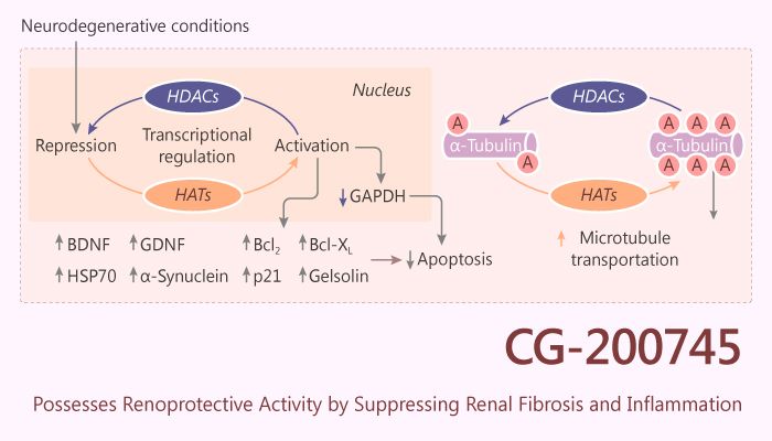 CG 200745 Possesses Renoprotective Activity by Suppressing Renal Fibrosis and inflammation 2019 10 18 - CG-200745 Possesses Renoprotective Activity by Suppressing Renal Fibrosis and Inflammation