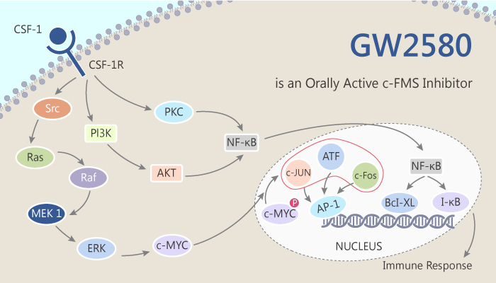 GW2580 is an Orally Active c FMS Inhibitor 2014 10 14 - GW2580 is an Orally Active c-FMS Inhibitor