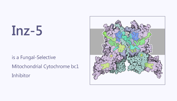 Inz 5 is a Fungal Selective Mitochondrial Cytochrome bc1 Inhibitor 2019 11 17 - Inz-5 is a Fungal-Selective Mitochondrial Cytochrome bc1 Inhibitor