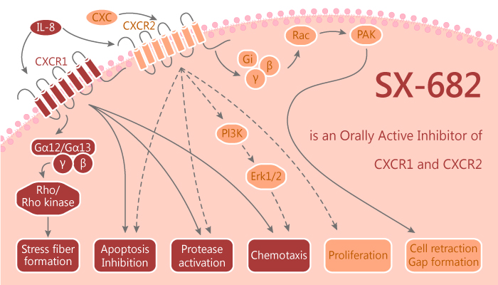 SX 682 is an Orally Active Inhibitor of CXCR1 and CXCR2 2019 11 15 - SX-682 is an Orally Active Inhibitor of CXCR1 and CXCR2