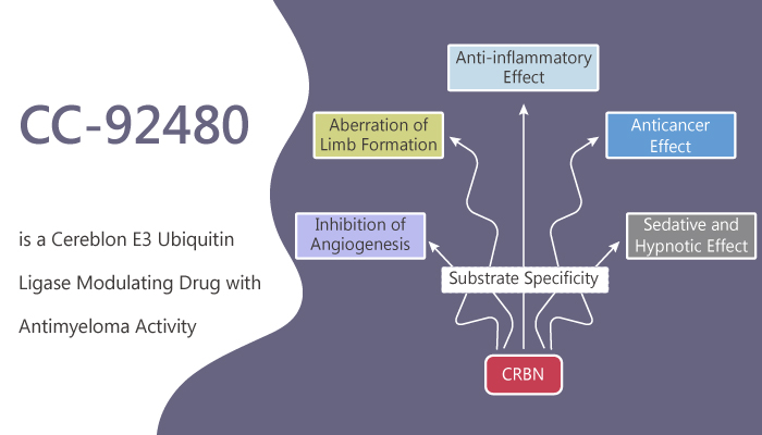 CC 92480 is a Cereblon E3 Ubiquitin Ligase Modulating Drug with Antimyeloma Activity 2019 12 10 - CC-92480 is a Cereblon E3 Ubiquitin Ligase Modulating Drug with Antimyeloma Activity