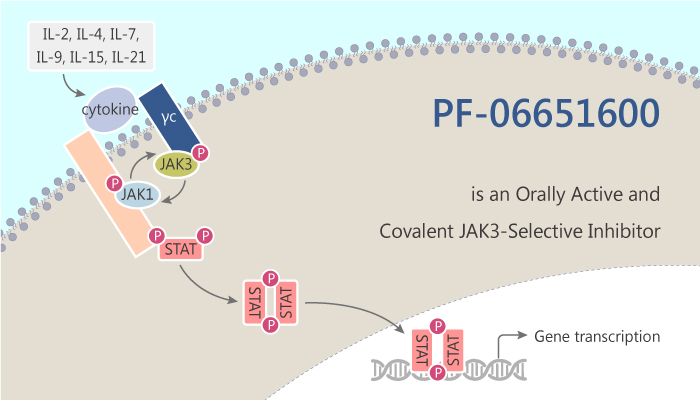 PF 06651600 is a Orally Active and Covalent JAK3 Selective Inhibitor 2019 12 2 - PF-06651600 is a Orally Active and Covalent JAK3-Selective Inhibitor
